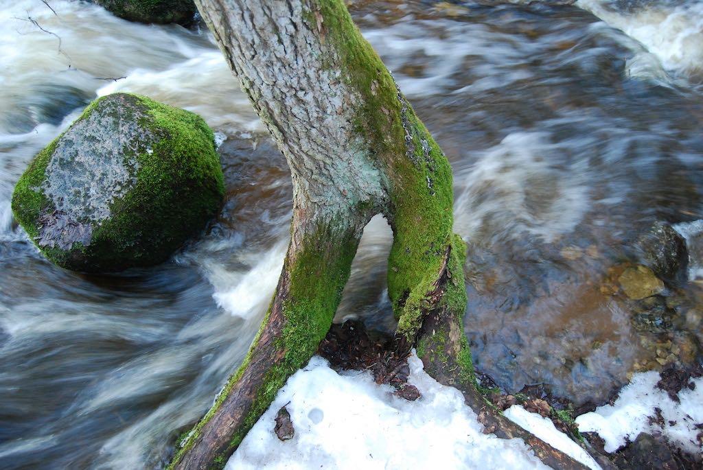 Pärlijõgi – tuiksoon mere ja metsa vahel